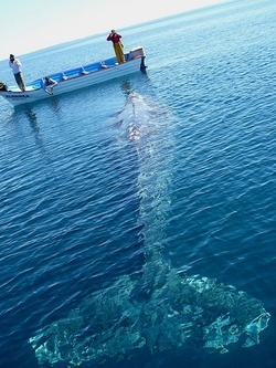 So, floating along in my ocean going kayak, and then WHALE!... how scary could knock that boat right over