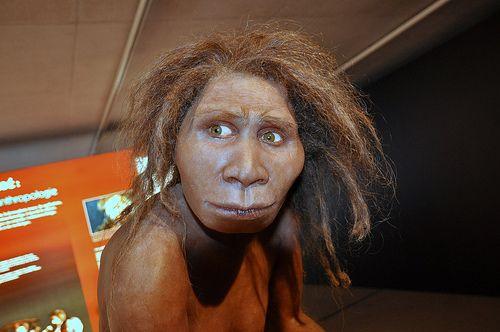 27. Homo georgicus. Se encontró en la República de Georgia.Los fósiles se han datado entre 1,8 y 1,6 millones de años. Características: Capacidad del cerebro entre  600-680cm3. Se han encontrado artefactos de piedra con los que cazaban , es decir, eran cazadores, recolectores. Esto pudo ser la clave de supervivencia de esta especie.