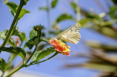 Butterfly On Flower, First Days Of Autumn Royalty Free Stock Photo, Pictures, Images And Stock Photography. Image 13216838.