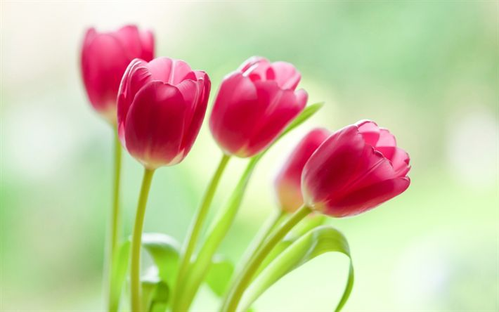Download wallpapers pink tulips, spring, beautiful flowers, spring bouquet, floral background, bokeh