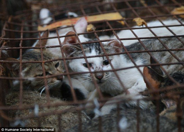 Inhumane: Chinese Dog and Cat Festival Victims--if you love cats and dogs please re-pin in protest to this barbaric custom. Disgusting!