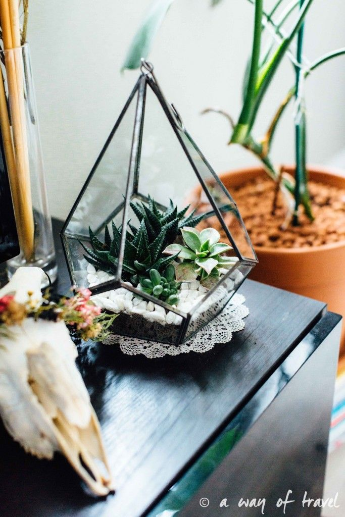 diy terrarium de succulentes a way of travel diy do it yourself pinterest travel. Black Bedroom Furniture Sets. Home Design Ideas