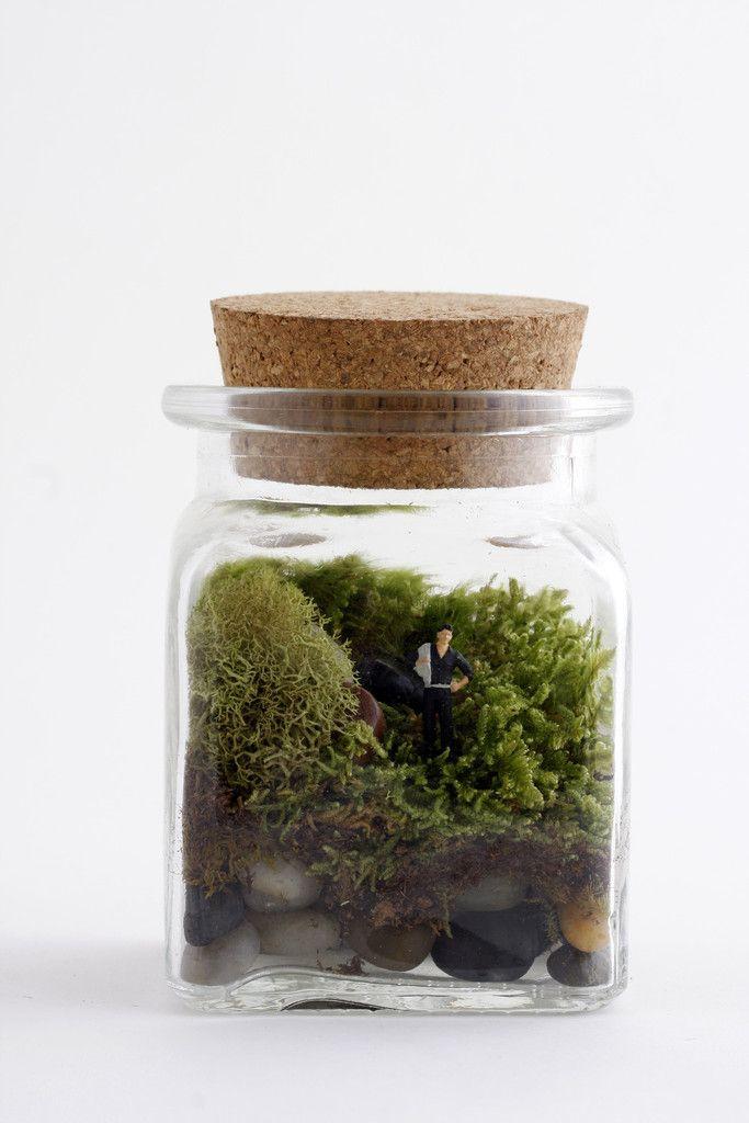 Le Petit Singularite DIY kit / Twig Terrariums