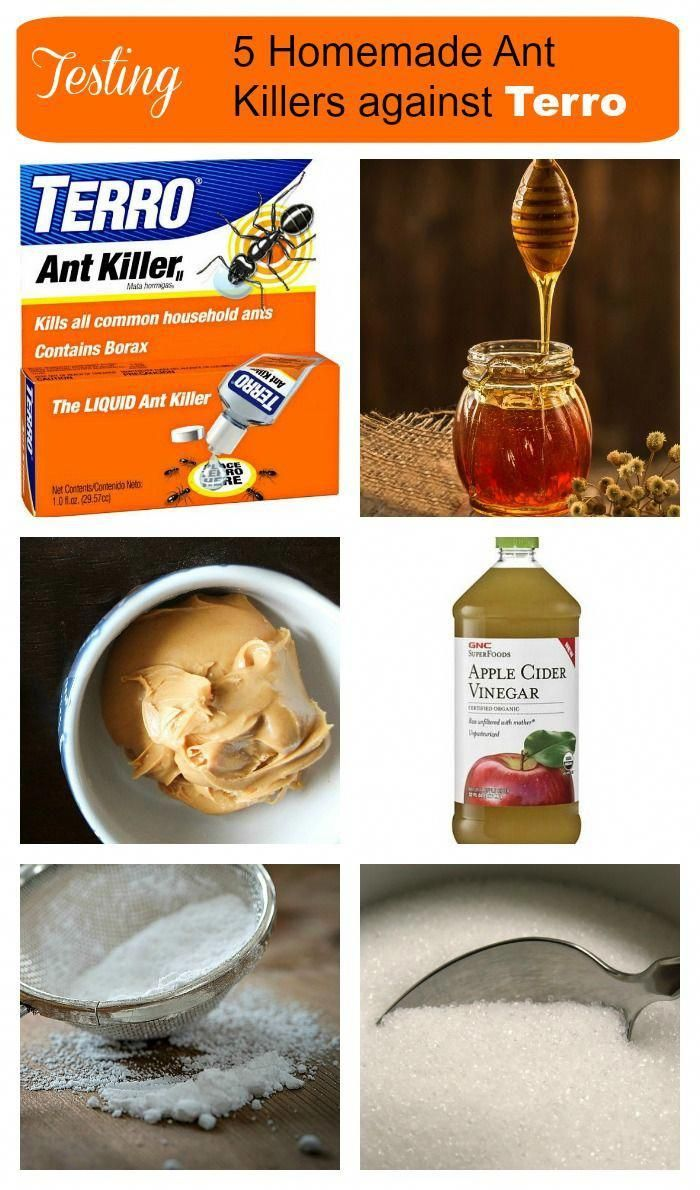 I recently tested several home made ant killers against ...