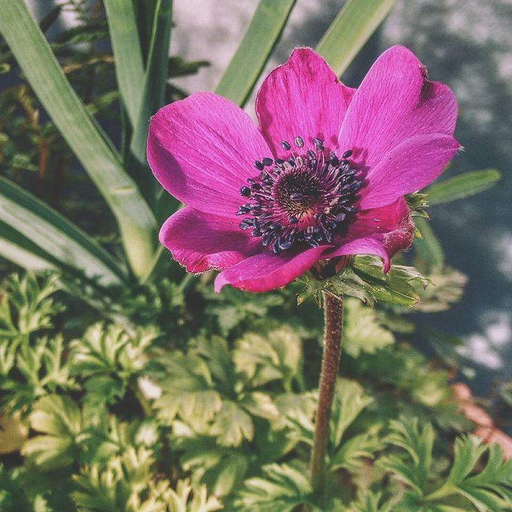 Flor // flowers