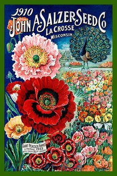 Seed Catalogs on Pinterest | Seed Packets, Vintage Seed Packets ...