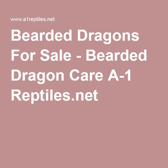 Bearded Dragons For Sale - Bearded Dragon Care A-1 Reptiles.net
