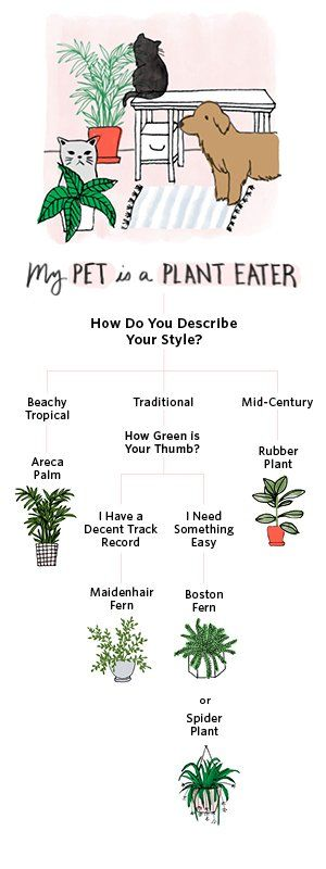 Shop Worry-Free Plants That Won't Poison Your Pets, Areca Palms are the Toxin-Filtering Tropical Houseplants Your Home Needs, Maidenhair Ferns Are Finicky Plant Divas, But Sure Are Beautiful, You're Going to Love This Low-Maintenance House Plant, Boston Ferns: An Easy-to-Grow, Non-Toxic Classic, The Houseplant Lover's Guide to Spider Plants: Tips, Tricks & Care and more