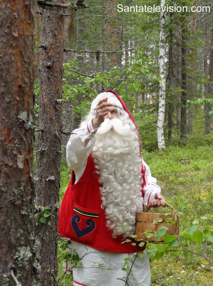 """Santa Claus picking usnea from the trees in Lapland to make """"superlichens"""" to reindeer."""