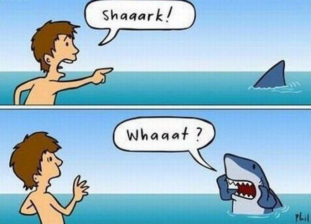 do shark's watch human week on tv?