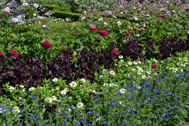 Flower Power at Royal Roads