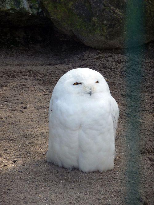 lil owl @alan williams