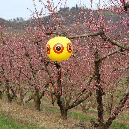 Que ce soit votre #potager ou votre verger, ne les laissez plus se faire piller par les oiseaux. Optez pour les ballons épouvantails ! #jardinage malin