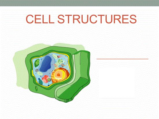 exploring the functions and structure of the animal cell Go to for free science videos for kids animal cell structure -cell is the basic unit of any living organismthey have differen.