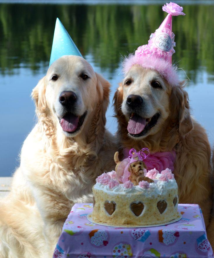 Картинки с днем рождения для собаки