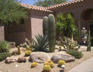 Desert Landscaping Plants