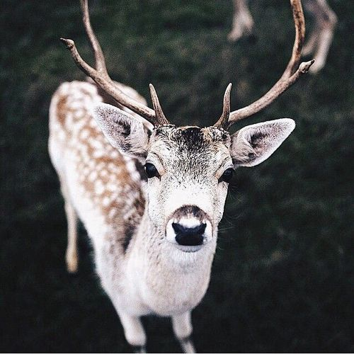 #Animales #navidad #Venadito #Magazinefeed