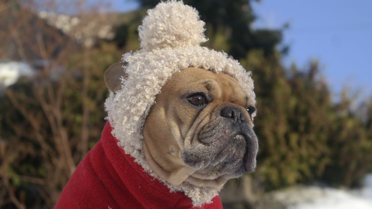 Keeping the head warm