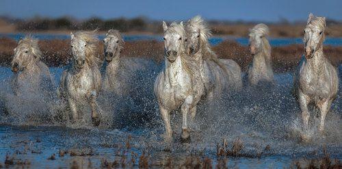 Full Speed.... by Paul Keates