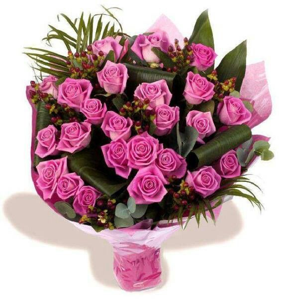 102 best ♢Pretty Roses & Carnations♢ images on Pinterest ...