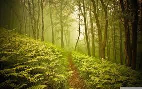 The greenwood.