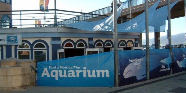 santa-monica-pier-aquarium