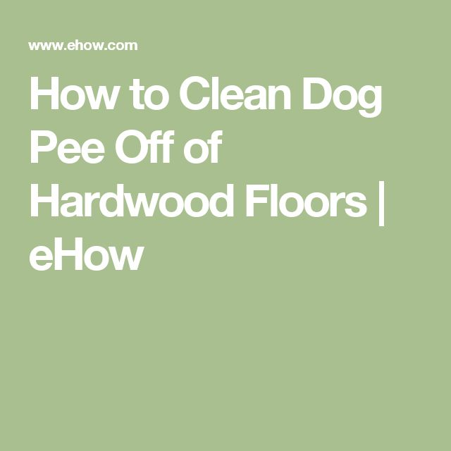 My Dog Peed On My Rug: Cat Urine Remover, Cleaning Cat
