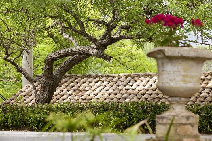 Around Pelecas Country Club #Corfu #Gardens #Authenticity