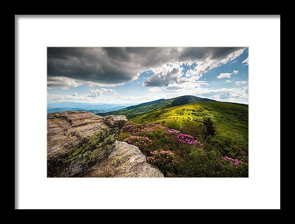Roan Mountain Framed Print featuring the photograph North Carolina Blue Ridge Mountains Roan Rhododendron Flowers Nc by Dave Allen