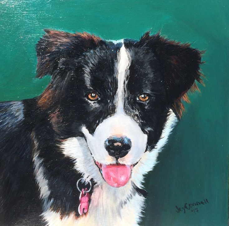 """Collie Fun"" by Joy Connell. Paintings for Sale. Bluethumb - Online Art Gallery"