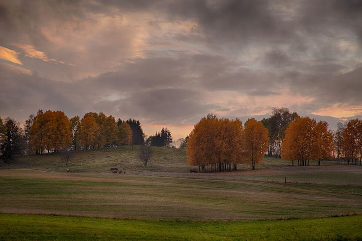 October night in the field by John Einar Sandvand on 500px