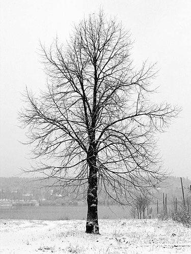 Talvipuu / Winter Tree | (c) Minna Autio