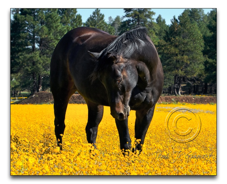 Horse in field of flowers | Horses, the beauty of ...