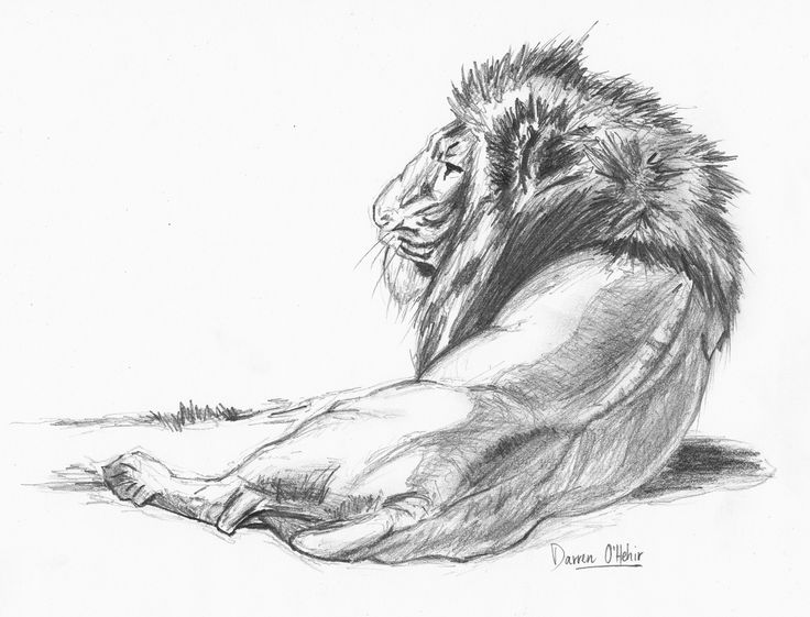 Lion Pencil Drawing By Darrenohhh Traditional Art Drawings Animals