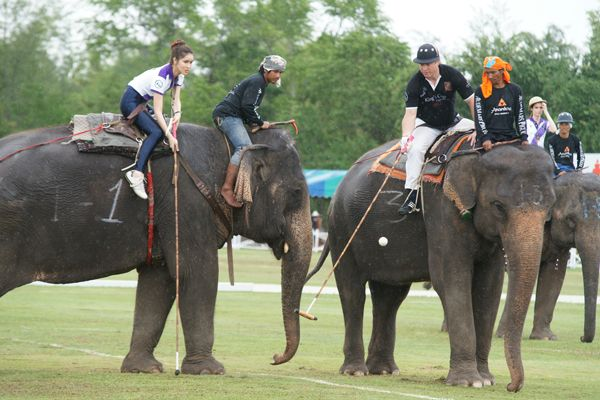 Elephant Polo Games in Thailand