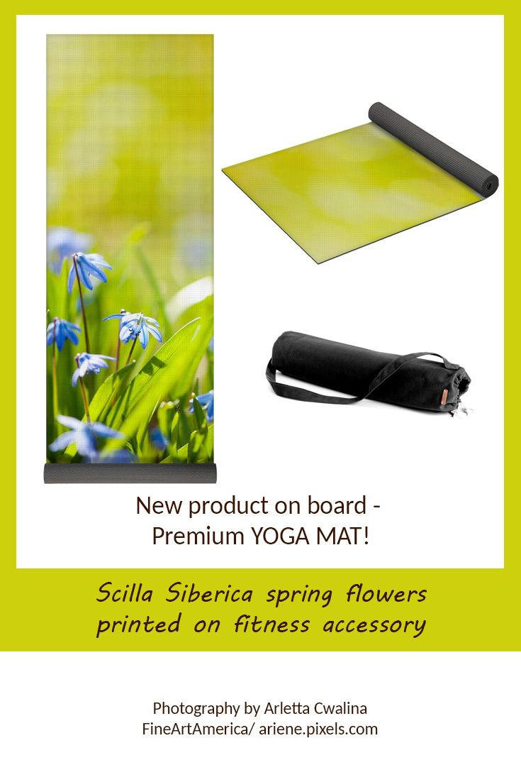 I'm proud and happy to introduce the new product - YOGA MAT - from FineArtAmerica, it looks just perfect with the nature photography printed on it! Look at the Scilla Siberica fresh spring flowers macro. Photography by Arletta Cwalina/ ariene.pixels.com. See more clothes and home decor ideas and if you love it, feel free to share, maybe your friends would like to have it too :) #fitness #yoga #mat #scillasiberica