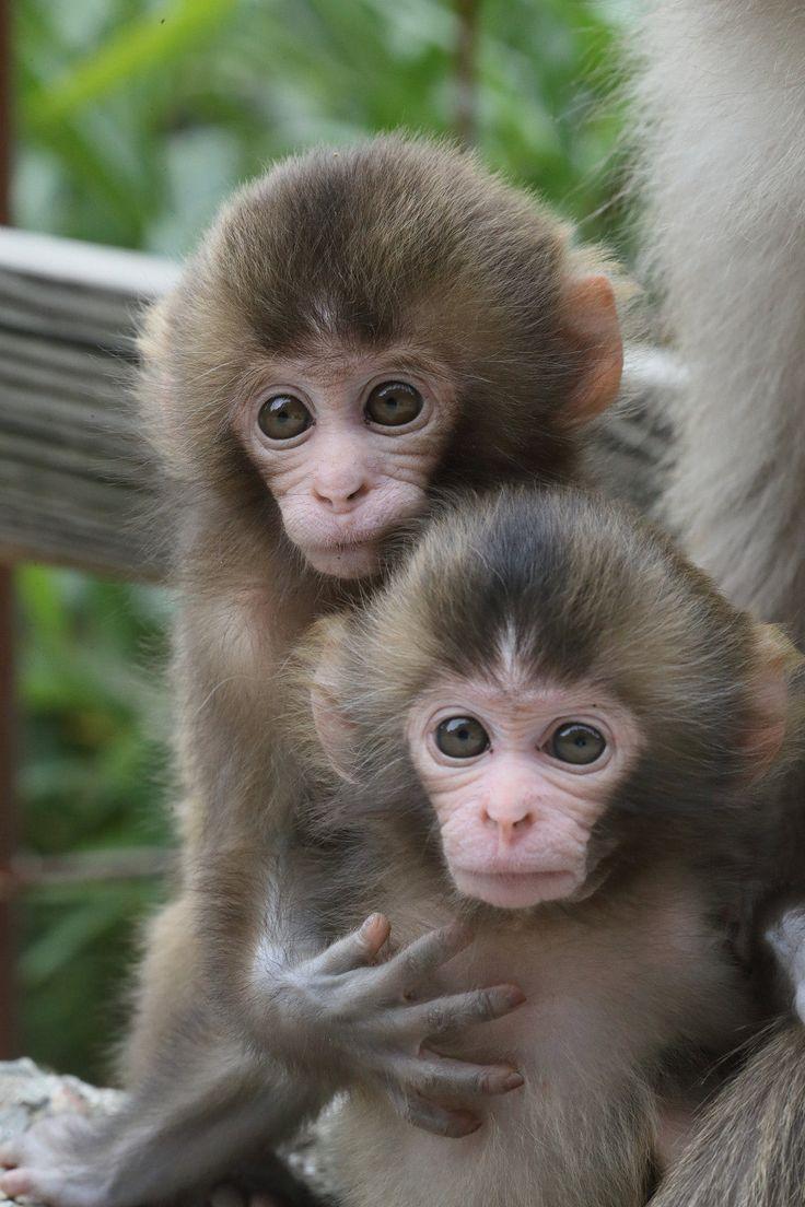 Pin by Elaine Adler on Animals in 2020 Cute monkey, Cute