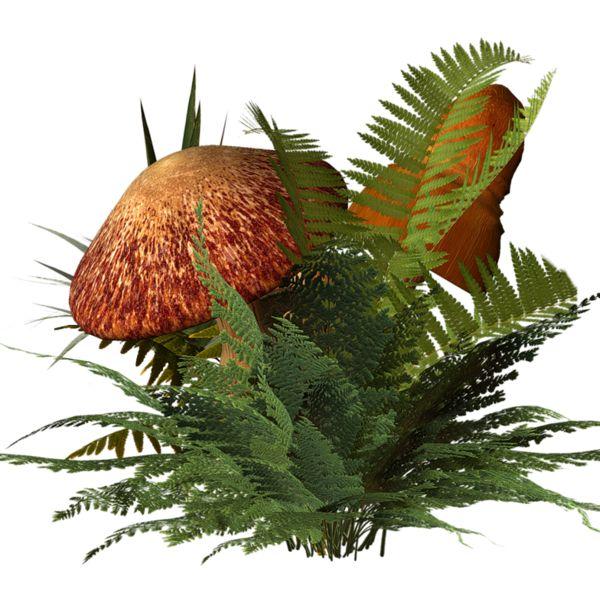 Tubes arbres et verdures plant cg source pinterest papier lettre photoshop et bordure - Arbre africain en 7 lettres ...