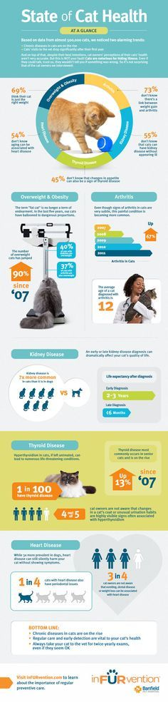 State of cat health, seems we need to be more careful with what we are feeding…