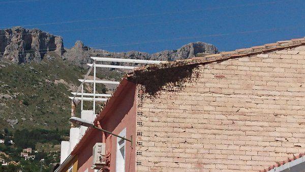 Un enjambre de abejas en la calle Doctor Marañón que amenaza a los vecinos