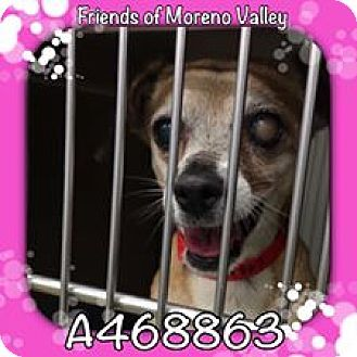 San Bernardino, CA - Chihuahua. Meet SAMANTHA - Urgent NOW! Has been there since 11/30/16. Will die Tuesday 01/10/17. a 10yr. old Chihuahua for adoption. http://www.adoptapet.com/pet/17319189-san-bernardino-california-chihuahua. Special Needs. Blind in one eye which is causing her pain. Has a quarter sized mass on her chest which a vet said can be removed when she is spayed which is being paid for by a private donor.