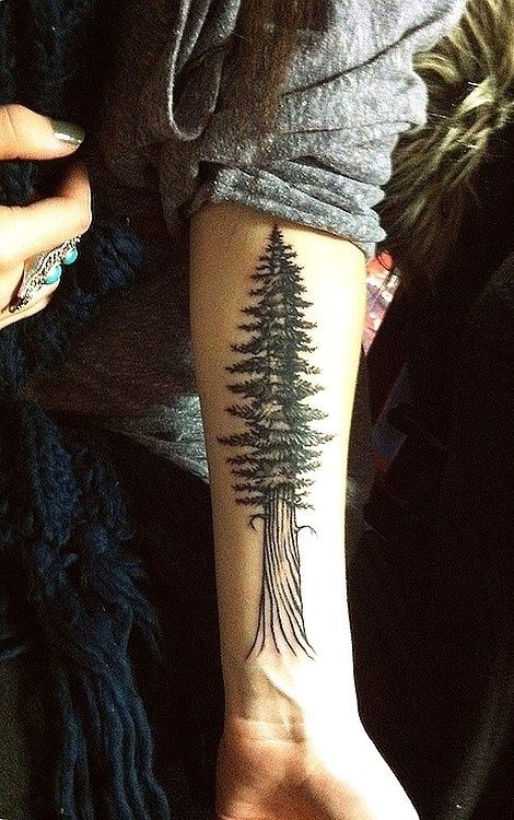 redwood tree tattoo, meaning: incorruptibility, protection, consistency, love, healing, and charity