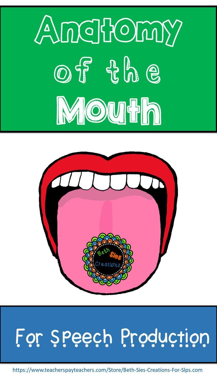 Anatomy Of The Mouth For Articulation A Speech Therapy No Print