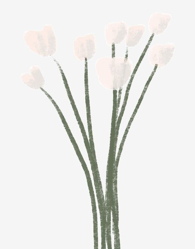 A Bunch Of White Flowers Bunch White Flowers Png Transparent Clipart Image And Psd File For Free Download White Flowers White Flower Pot Small White Flowers