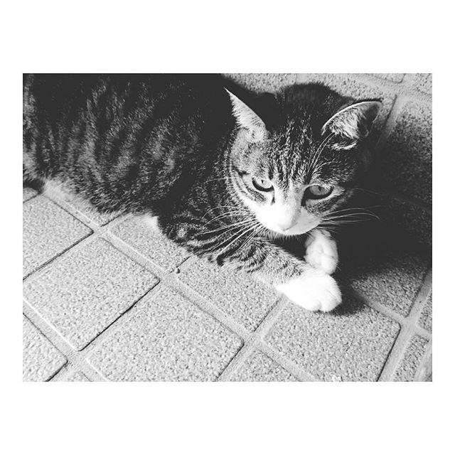先日退院しました🐾 . #手術して6日間入院 #入院中ずっと点滴 #💉 #またしばらくお薬生活 #💊 . はやくよくなりますように🙏💕 . #🐱れお♂ #愛猫 #cat #고양이  #にゃんにゃん #야옹  #前足はくるぶしソックス  #後ろ足はハイソックス  #にゃんすたぐらむ