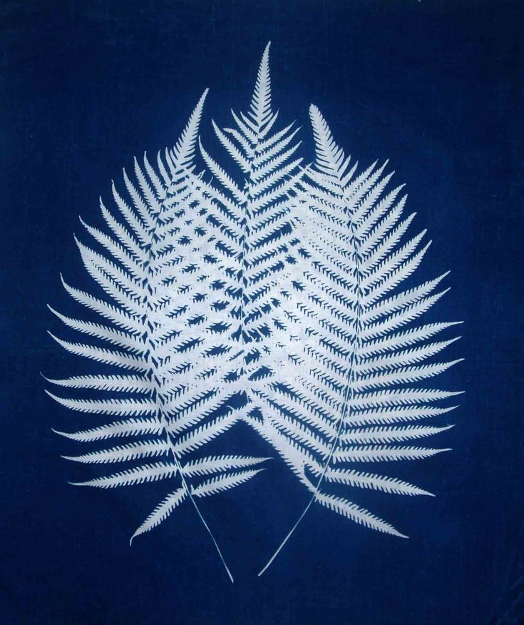 Three ferns, cyanotype on fabric by H. Lisa Solon. These images are part of the author's continuing exploration of the plants of Jamaica