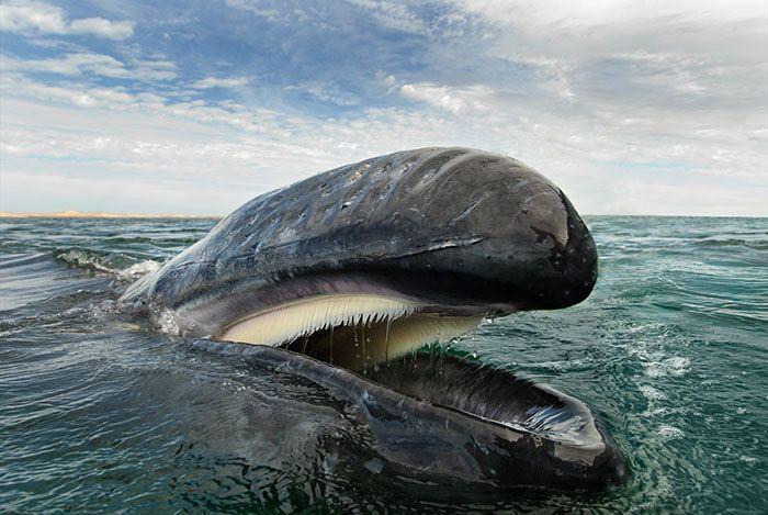 Fotógrafo Passa 25 Anos Documentando A Beleza Majestosa De Baleias E Golfinhos