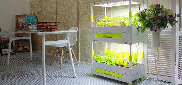 Как вырастить зимой свежую зелень: 8 примеров, 10 гаджетов в помощь