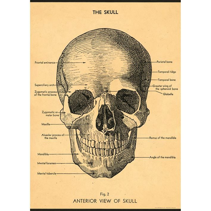 Poster/Giftwrap - The Skull at Evans and Hall $6.95 #Cavallini