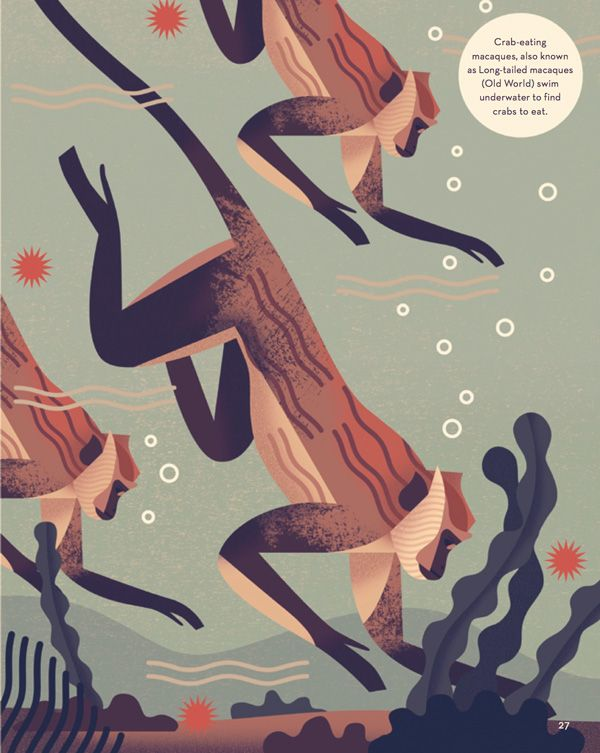 Mad About Monkeys: A Loving Illustrated Encyclopedia of Weird and Wonderful Kindred Creatures   Brain Pickings